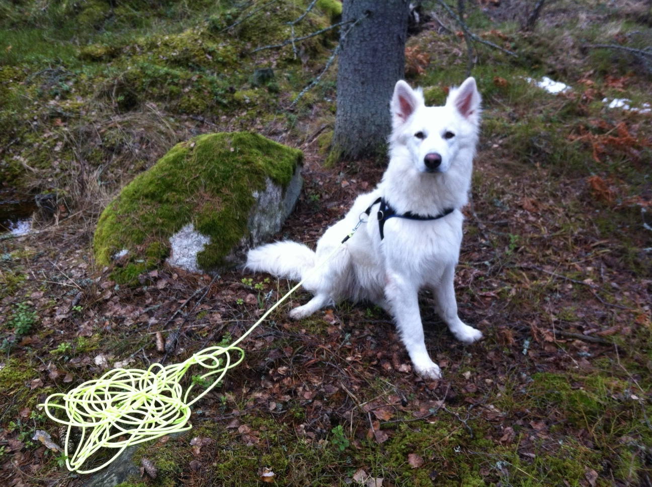 Igor väntar på att få börja viltspår
